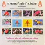 thailand_tb_2522_s